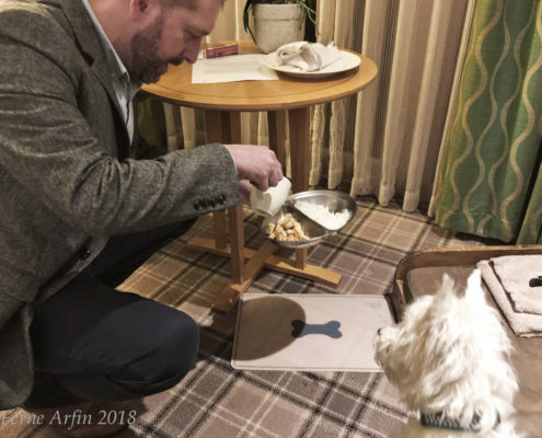 Serving Lulu the Westie her gourmet dinner,