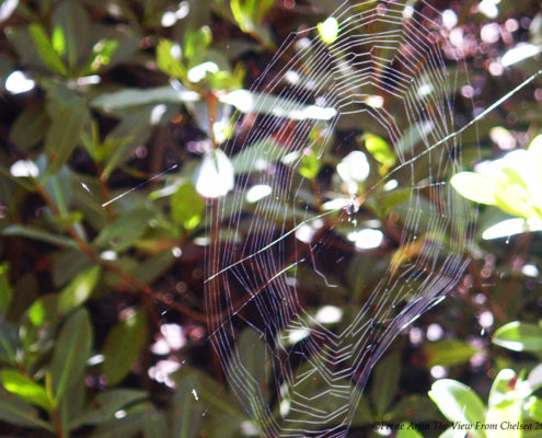 Florida Spiderweb