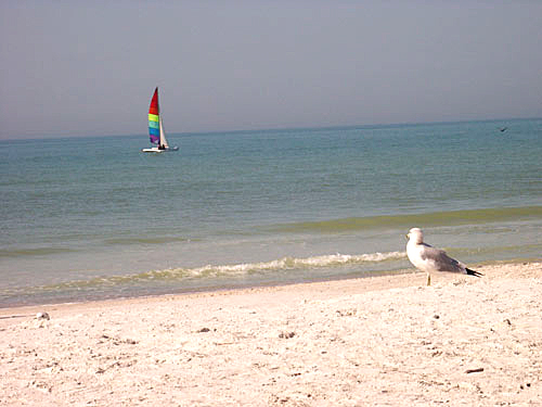 Lone seagull on the beach looking at a sail catamaran with purple, blue, green, yellow, red and magenta striped sailes