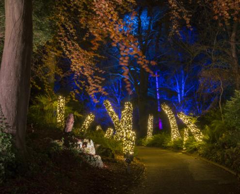 Christmas lights in a darkened woodland. Aviary gardens, waddesdon manor, light trail, christmas, christmas lights,