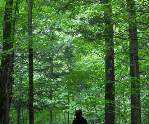 White Pines in Saratoga Springs Spa State Park weekend escape