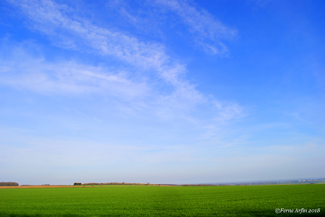 yorkshire-wolds, england, UK, farm, barley, beer, green, flat, big sky
