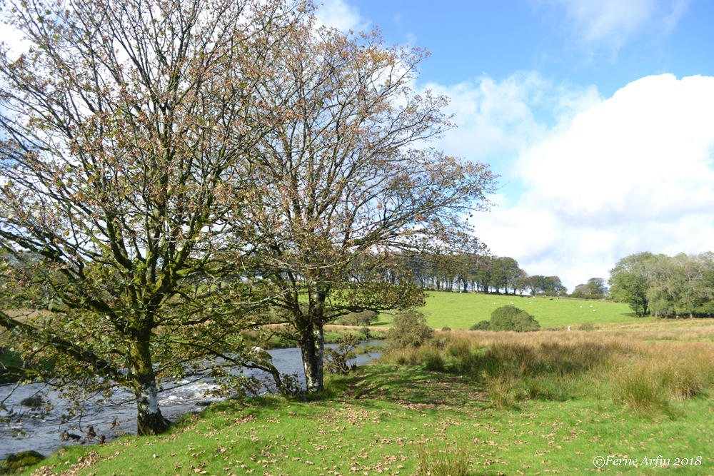 #Dartmoor #england #devon #riverview #west-dart-river #early springnational-park, lat