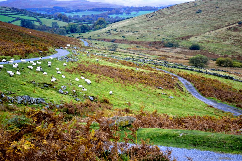 #Dartmoor #spring #england sheep #devon #landscape #social-distancing