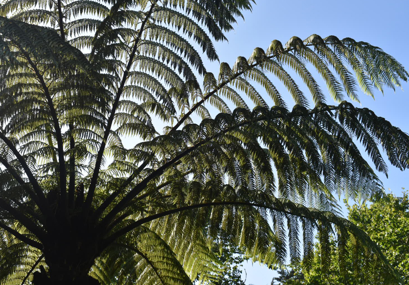 Tresco Abbey Garden, Isles of Scilly, Duchy of Cornwall, Tresco, England, UK