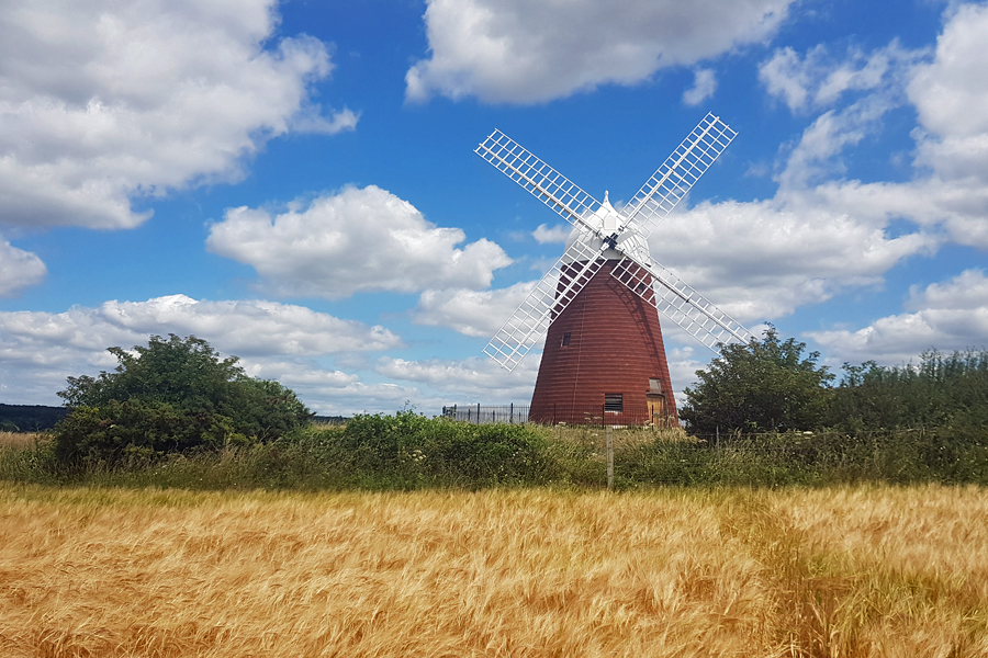 west sussex walk, Halnaker Windmill, Restored Windmill in the South Downs National Park