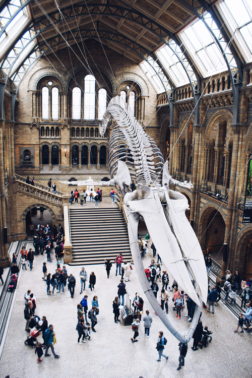 Natural HIstory Museum, London after lockdown