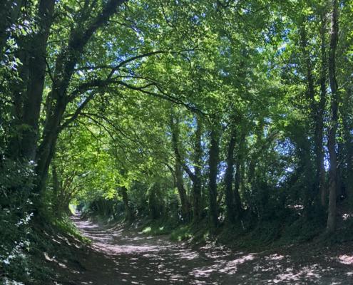 Halnaker Tree Tunnel