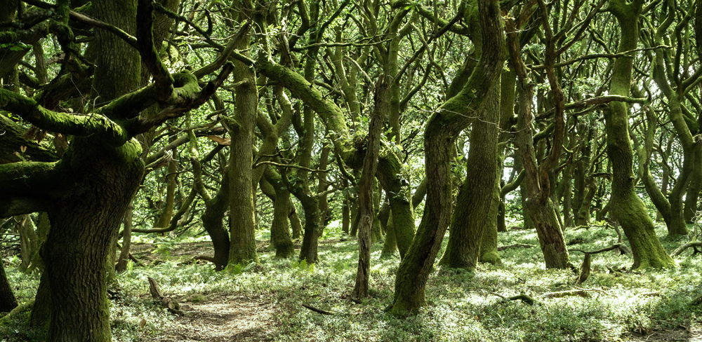 haunted woods, Monmouthshire, Wales, Usk Valley, St Mary's Vale