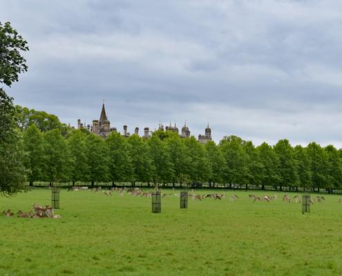 Deer, Burghley House, roofline, village, Stamford, England, Midlands, Elizabethan House